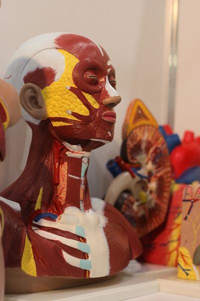 Выставка WorldDidac Russia 2017 Anatomy
