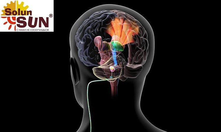 Что такое мозжечок и как он работает?
